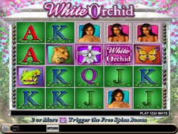 IGT Slot Game - White orchid